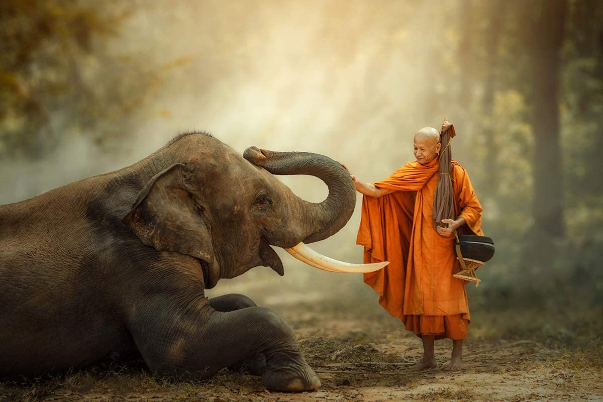 Thailand Elephant And Monks