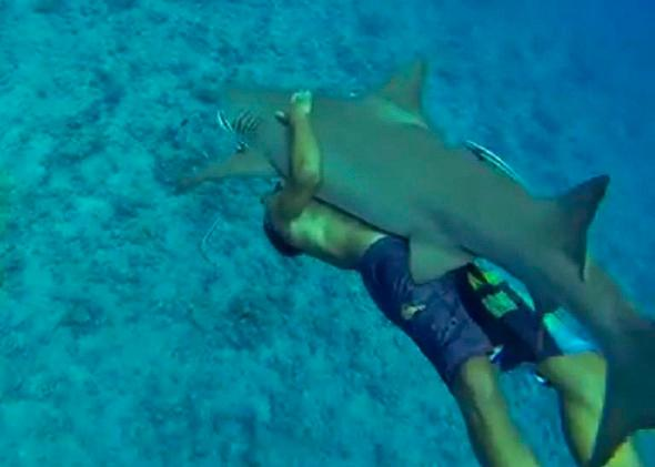 Riding-A-Lemon-Shark-Bora